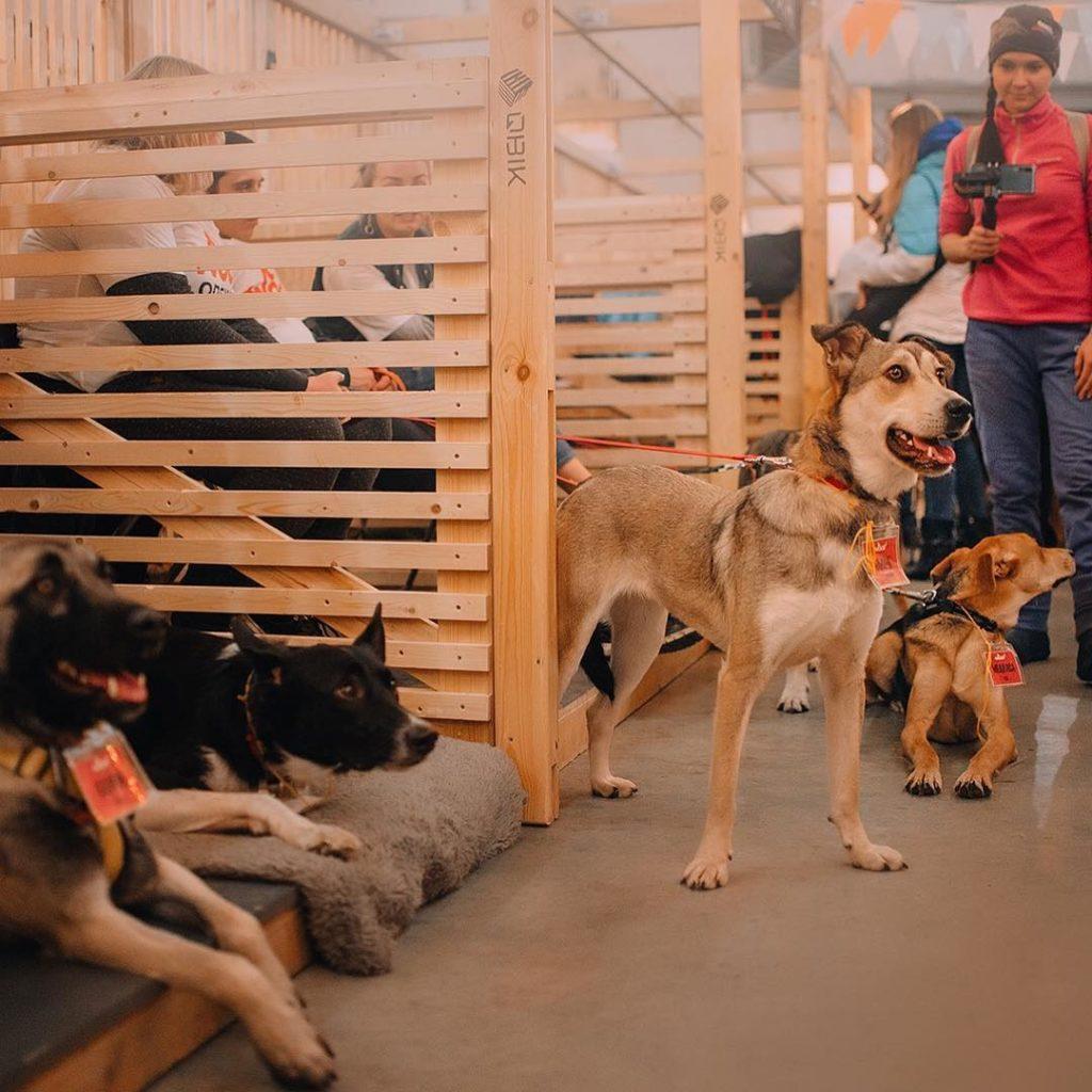 WOOF-фестиваль в Ростове-на-Дону: шанс для приютских кошек и собак обрести дом